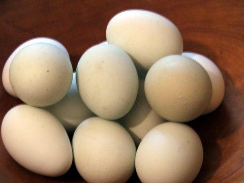 blue-eggs-1.jpg
