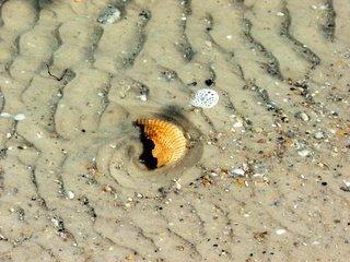 shell-in-water.jpg