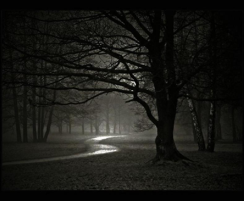 werewolf-forest-night-dark[1]